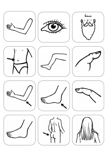 Bildersammlung: Körperteile - Kindersprache, Neurologie - madoo.net