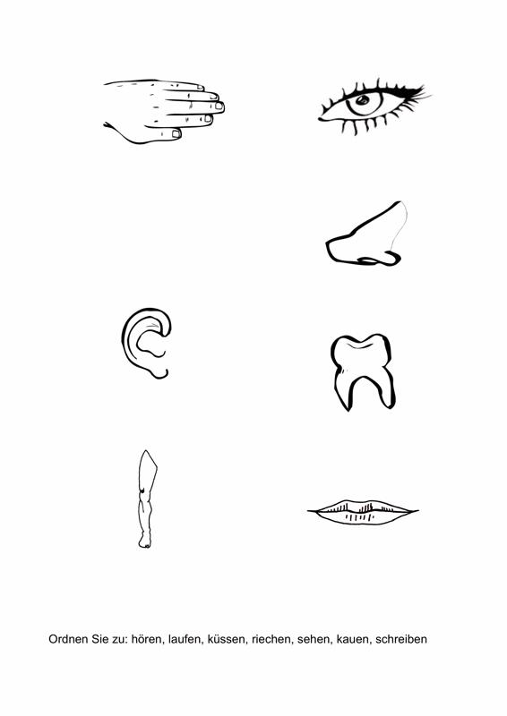 Verben Körperteilen zuordnen - Aphasie - madoo.net