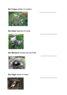Tiere: Bildkarten und Sätze