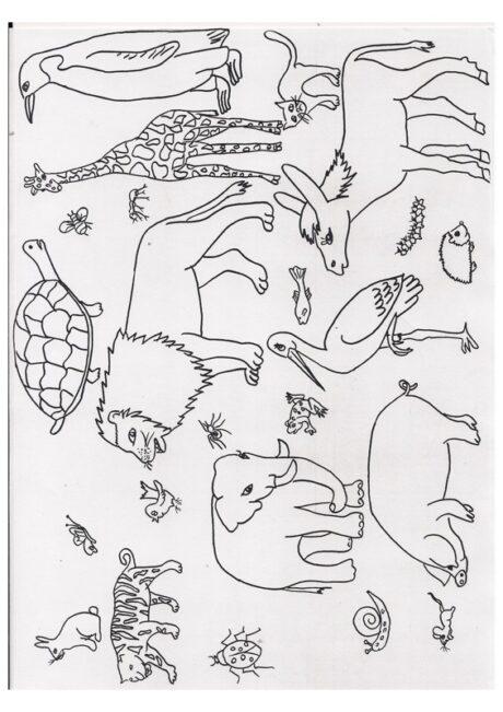 wimmelbild tiere  kommunikation sprache  madoo