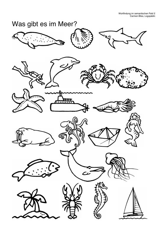 Wortfindung: Was gibt es im Meer? - Aphasie - madoo.net