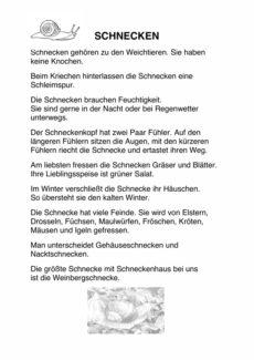 """Semantisches Feld """"Schnecken"""""""