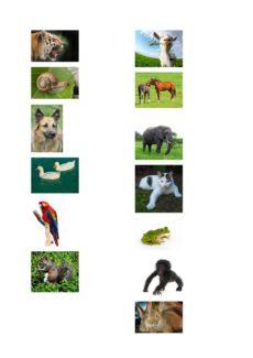 Dativ und Akkusativ mit Futter und Tieren