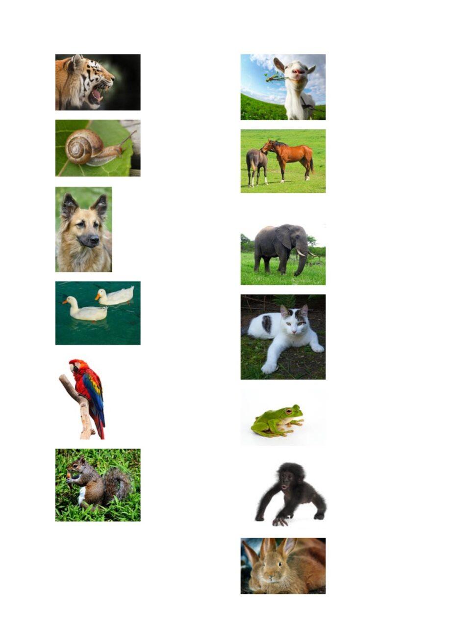 Dativ und akkusativ mit futter und tieren ses for Von akkusativ oder dativ