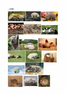 Die Tiere schlafen