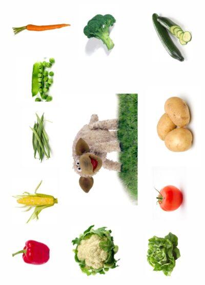 Das Schaf Wolle mag Gemüse