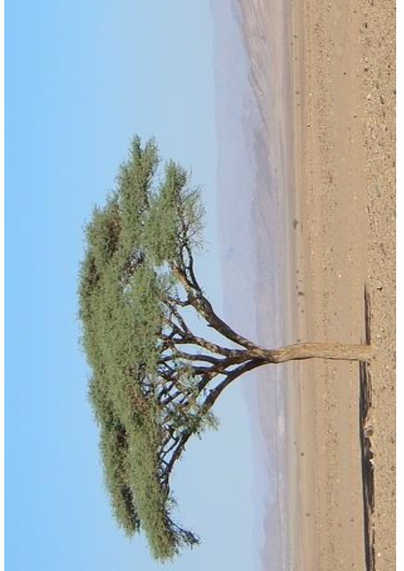 Motivationsbild Wüste