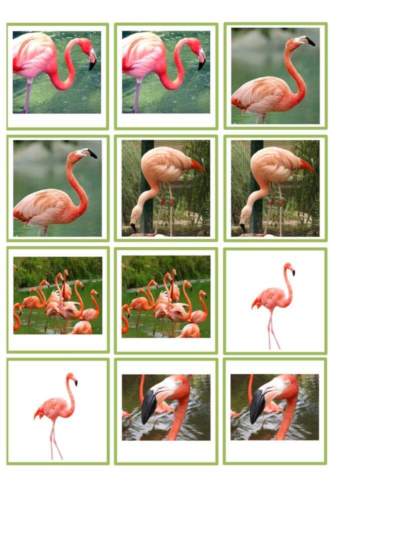 Flamingo Memory