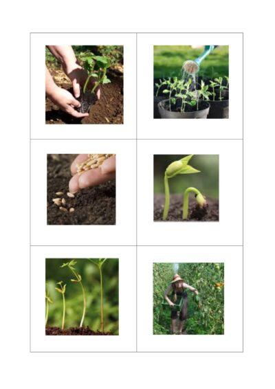 Wortschatz: Tätigkeiten im semantischen Feld Obst / Gemüse