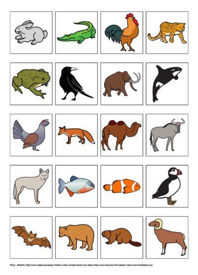 Bildkarten: Tiere und ihre Merkmale
