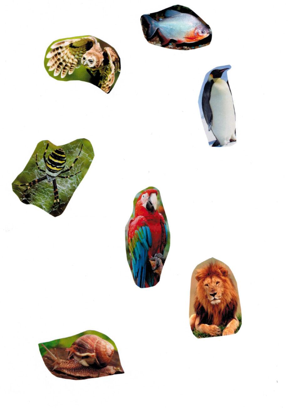 Tiere-Grundmaterial