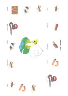 Der Frosch Frisst