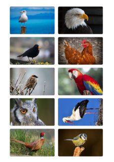 Bildkarten Vögel