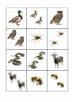 Plural /-n/ – Tiere