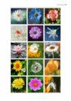 Blumenmemory
