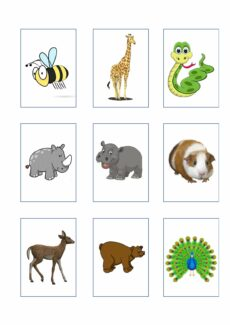 Bildkarten Zootiere (2)