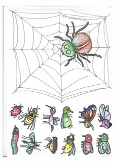 Die hungrige Spinne