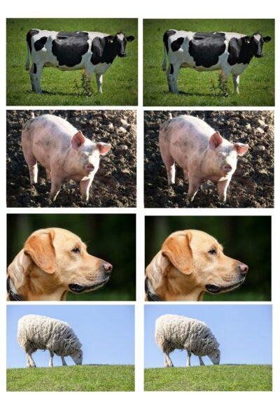 Wortschatzerweiterung Bauernhoftiere