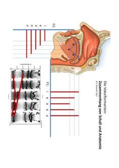 Vokalformanten: Zusammenhang von Schall und Anatomie